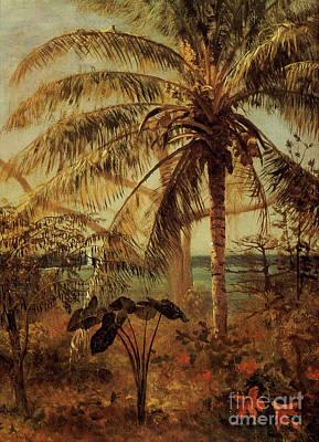 Painting - Palm Tree, Nassau, 1892  by Albert Bierstadt