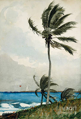 Brewing Painting - Palm Tree, Nassau, 1898 by Winslow Homer
