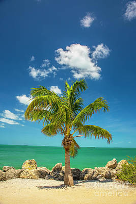 Palm Tree Of Colorful Key West Art Print by Felix Lai