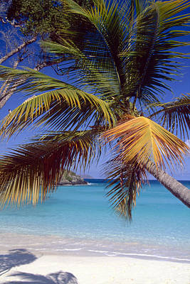 Palm Tree On A Caribbean Beach Art Print by George Oze