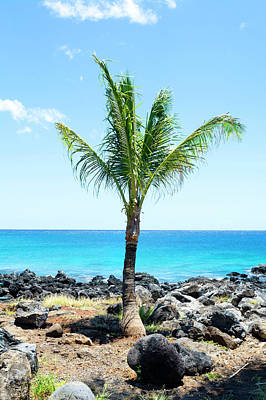 Photograph - Palm Tree On Beach by Joe Belanger