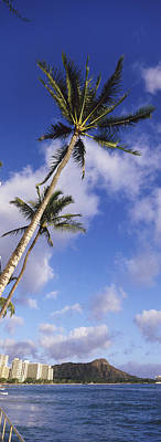 Diamond Head Photograph - Palm Tree On The Beach, Diamond Head by Panoramic Images