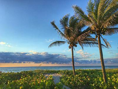 Photograph - Palm Tree Path Delray Beach Florida  by Lawrence S Richardson Jr