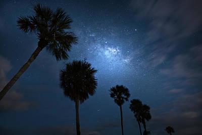 Photograph - Palm Tree Photobomb by Mark Andrew Thomas