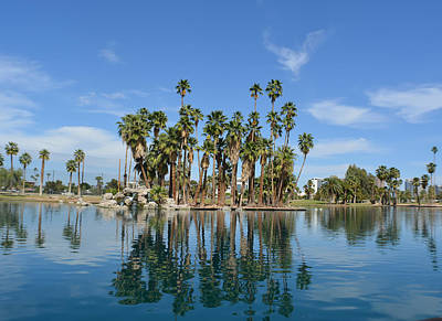 Photograph - Palm Tree Reflections by Aimee L Maher Photography and Art Visit ALMGallerydotcom