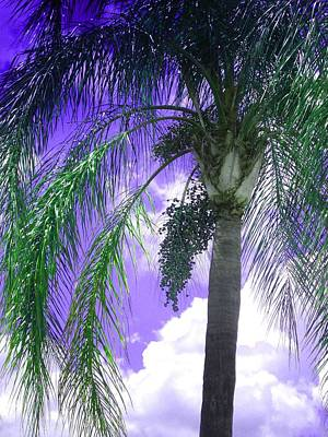 Print featuring the photograph Palm Tree Seeding by Rosalie Scanlon