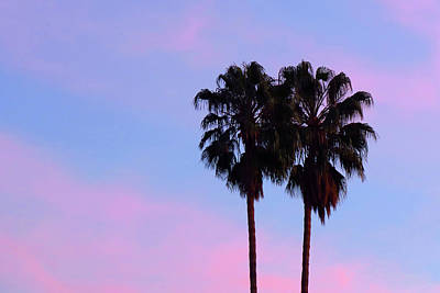 Photograph - Palm Trees Silhouette At Sunset by Ram Vasudev
