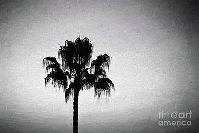 Photograph - Palm Tree Silhouette Black And White by Sharon McConnell