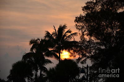 Photograph - Palm Tree Silhouette by Bob Sample