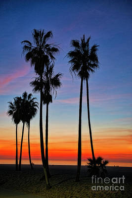 Photograph - Palm Tree Silhouette by David Arment