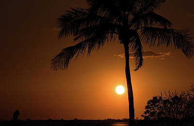 Photograph - Palm Tree Silhouette by Janice Adomeit