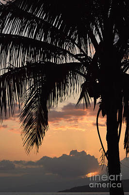 Bringing The Outdoors In - Palm Tree Silhouette by Judy Tomlinson