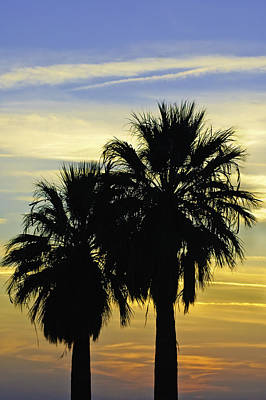 Palm Tree Silhouette Art Print by Sherri Meyer