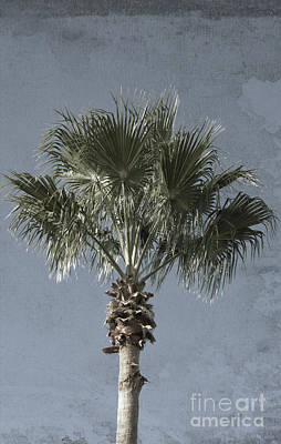 Photograph - Palm Tree Solo by Ella Kaye Dickey