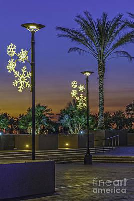 Photograph - Palm Tree Sunrise by David Zanzinger