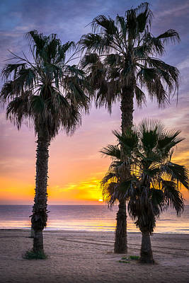 Photograph - Palm Tree Sunrise. by Gary Gillette