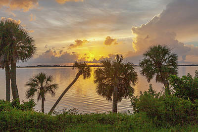 Photograph - Palm Tree Sunrise by Gordon Elwell
