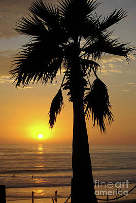 Photograph - Palm Tree Sunset by Jim And Emily Bush