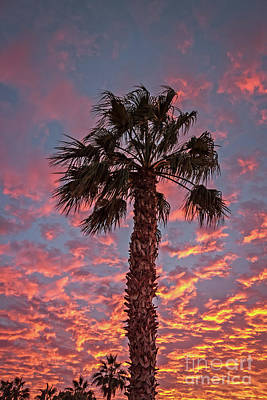 Photograph - Palm Tree Sunset by Robert Bales