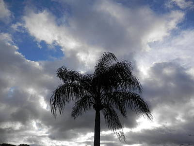 Photograph - Palm Tree Swaying In Wind by Belinda Lee