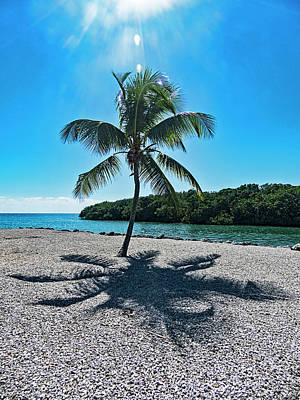 Photograph - Palm Tree Under The Sun by Bob Slitzan