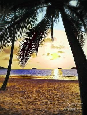 Photograph - Palm Tree View by Ian Gledhill
