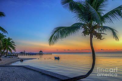 Photograph - Palm Tree With Attitude by David Zanzinger