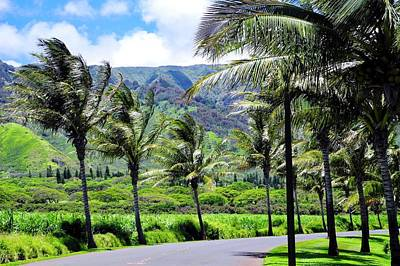 Photograph - Palm Trees Along The Road To Kahili by Kirsten Giving