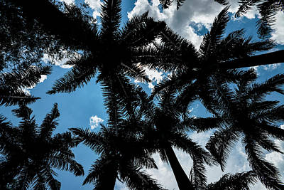 Photograph - Palm Trees And Blue Sky by Alexandre Rotenberg