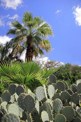 Photograph - Palm Trees And Cactus by Angela Murdock