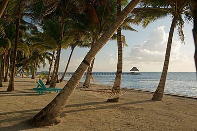 Palapas Wall Art - Photograph - Palm Trees And Hammock On San Pedro by Panoramic Images