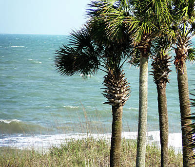 Photograph - Palm Trees And Ocean by Amy Jo Garner