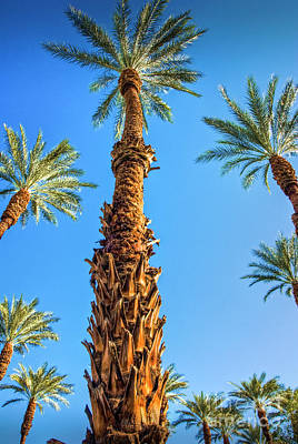 Photograph - Palm Trees And Sky Vertical by David Zanzinger
