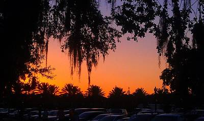 Photograph - Palm Trees And Spanish Moss Sunset by Deborah Lacoste