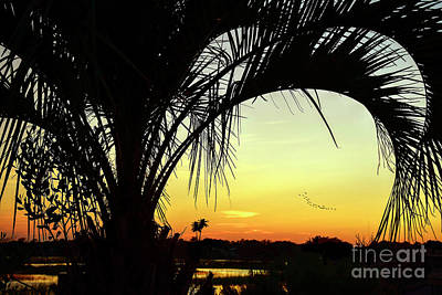 Photograph - Palm Trees And Sunset by Kathy Baccari