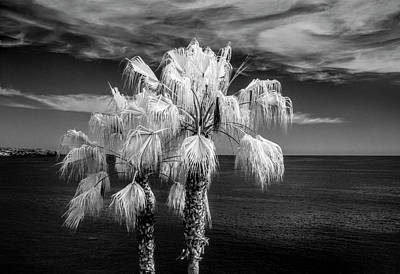 Art Print featuring the photograph Palm Trees At Laguna Beach In Infrared Black And White by Randall Nyhof