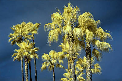 Photograph - Palm Trees At Laguna Beach by Randall Nyhof