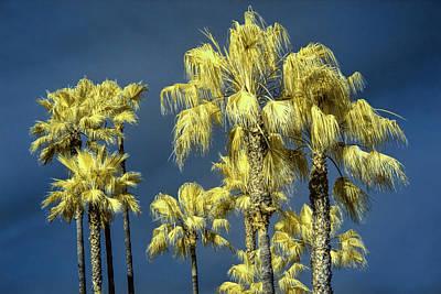 Photograph - Palm Trees At Laguna Beach by Randall Nyhof