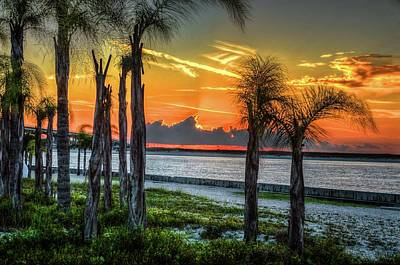 Photograph - Palm Trees At Perdido Pass by Michael Thomas