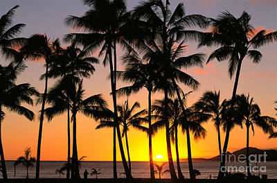 Photograph - Palm Trees At Sunset by Bill Schildge - Printscapes