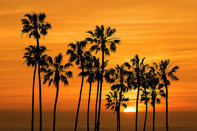 Art Print featuring the photograph Palm Trees At Sunset By Cabrillo Beach by Randall Nyhof