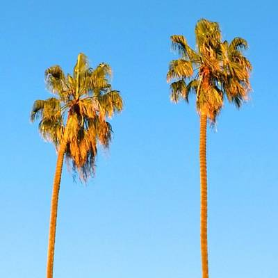Summer Wall Art - Photograph - #palm #trees At Sunset. #california by Shari Warren
