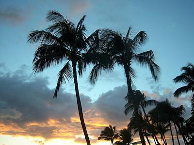 Photograph - Palm Trees At Sunset by Charles HALL