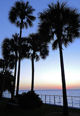 Photograph - Palm Trees At Sunset by Emmy Vickers