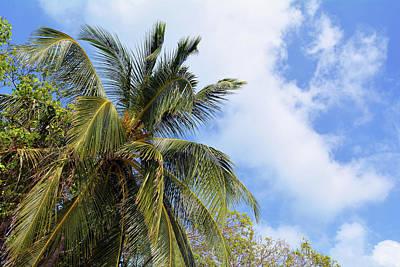 Photograph - Palm Trees Background by Oana Unciuleanu
