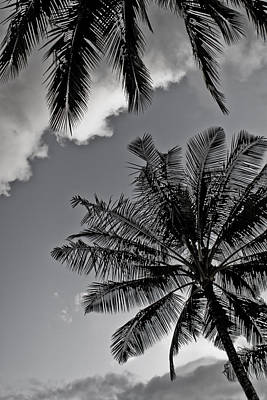 Photograph - Palm Tree's Black And White by Lannie Boesiger