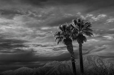 Photograph - Palm Trees By Borrego Springs In Black And White by Randall Nyhof