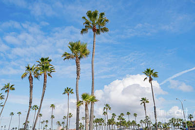Kitchen Mark Rogan - Palm trees, clouds and blue sky by Chon Kit Leong