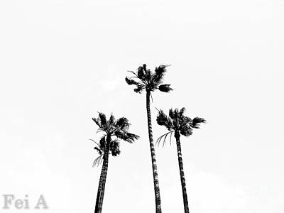 Photograph - Palm Trees by Fei A