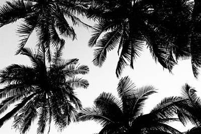 Photograph - Palm Trees by Fine Arts